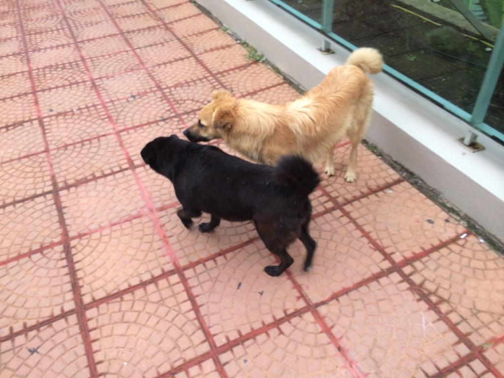 Perros de Punta
